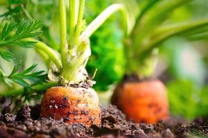 Foto: ©Visions-AD-Fotolia.com